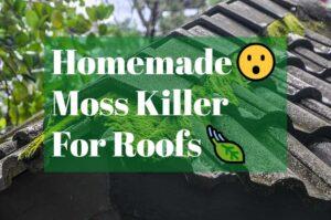 Homemade moss killer for roofs